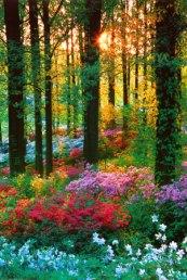 foresta-in-fiore